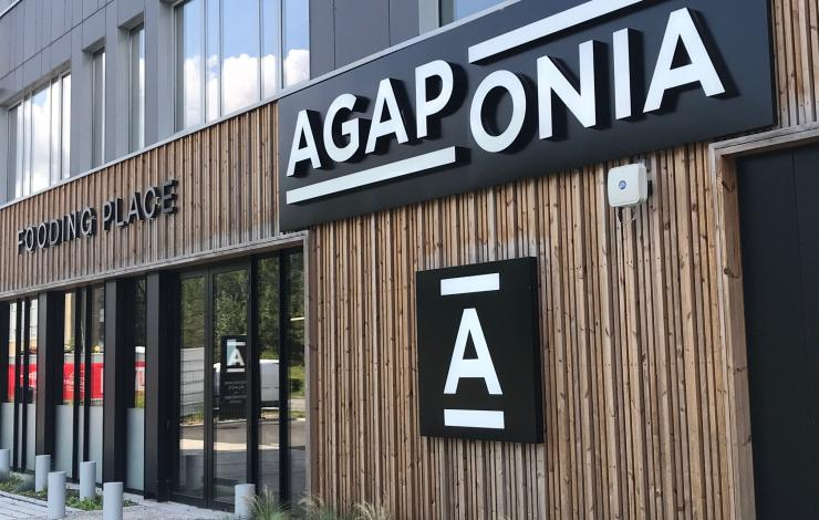Agaponia