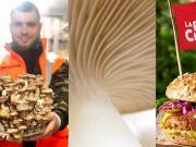foodtech : la startup pleurette lève 2.5 M€ pour faire sa révolution champignon et des burgers végétaux